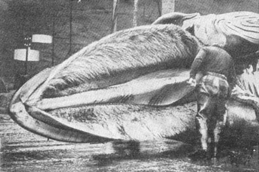 Фото из книги л мэтьюса кит