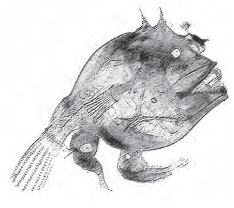 Бекки Крю - Синицы-зомби, рыбы-космонавты и другие необычные животные
