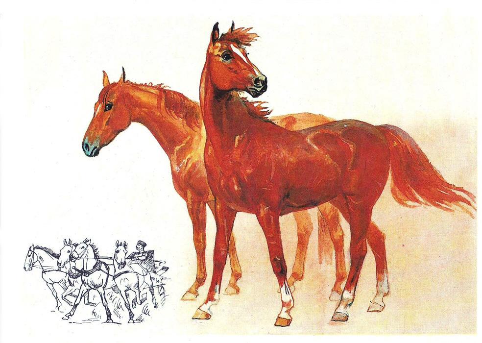 Лошадь наш друг открытки 98