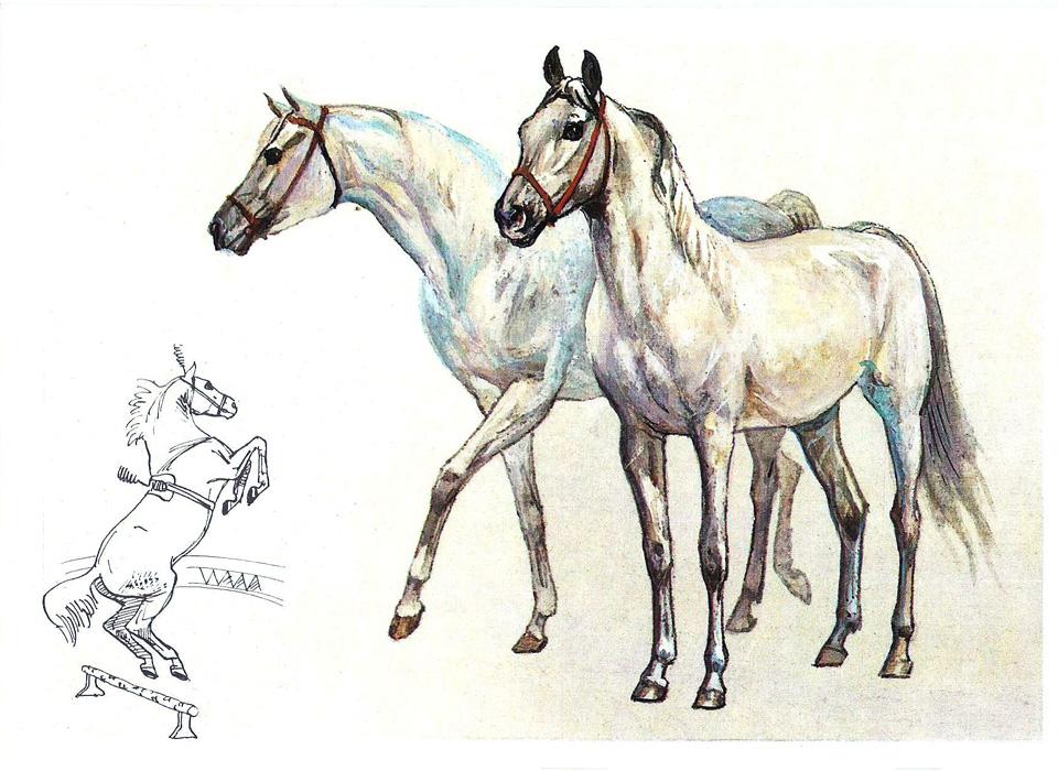 Лошадь наш друг открытки 42