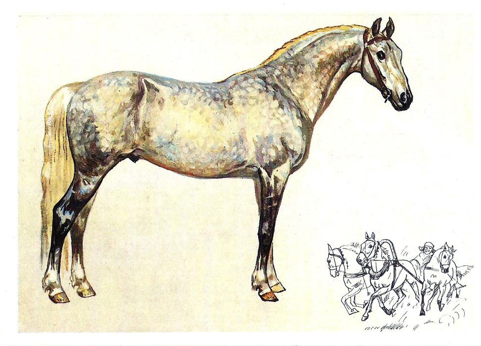 Лошадь наш друг открытки 46