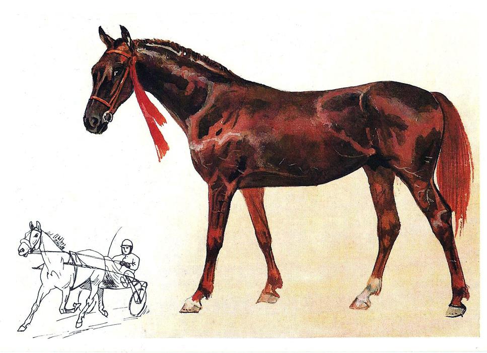 Лошадь наш друг открытки 15