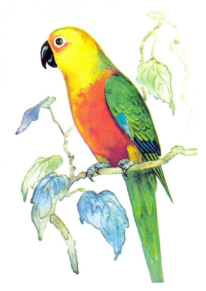 Картинки чайки для детей