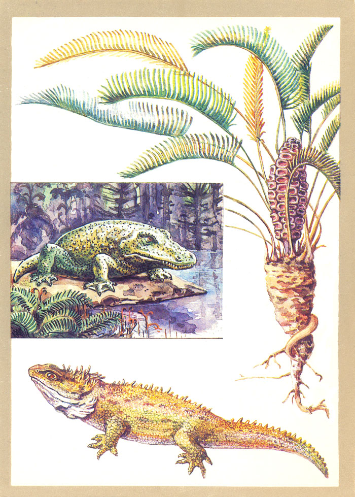 Открытки с рептилиями 98